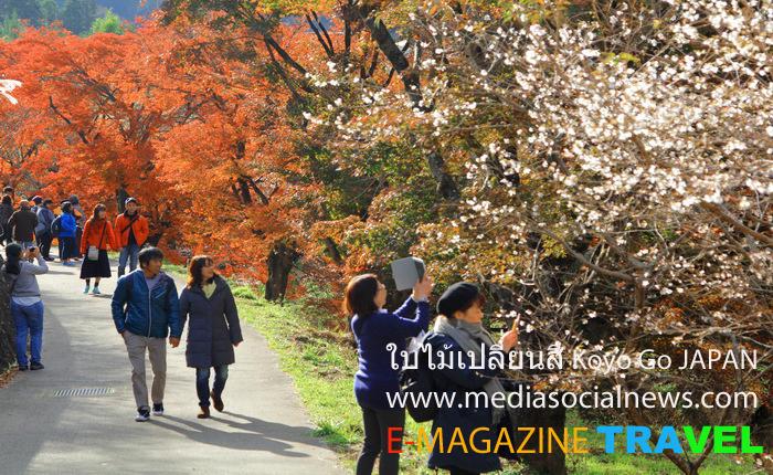 ใบไม้เปลี่ยนสี ประเทศญี่ปุ่น( Koyo Go JAPAN)