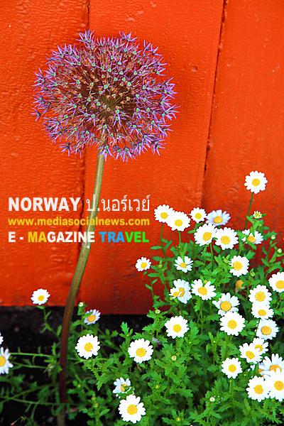 ประเทศนอร์เวย์ NORWAY เส้นทางขึ้นเหนือ