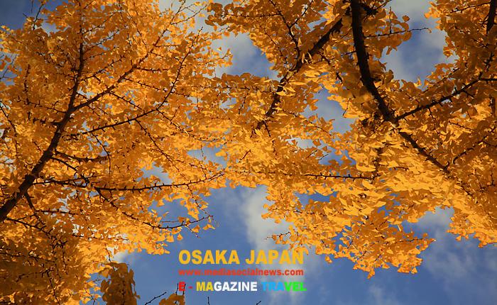 โอซาก้า ประเทศญี่ปุ่น OSAKA JAPAN ใบไม้เปลี่ยนสี