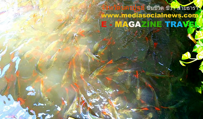 นครปฐม ปลา แม่น้ำท่าจีน